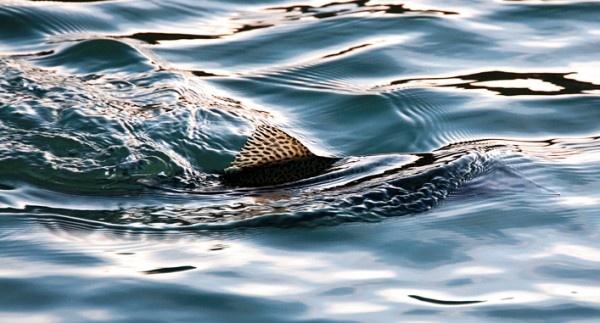 1000 Images About Reel Women Fish On Pinterest Mahi