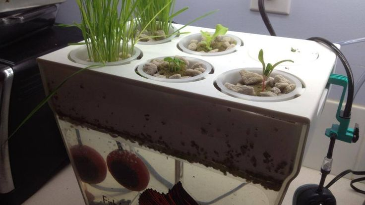 A fish and vegetable garden for your apartment
