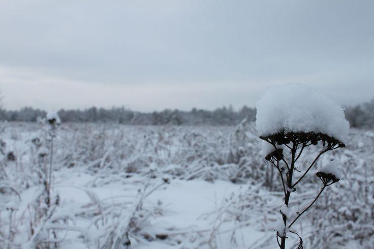 field under the snow
