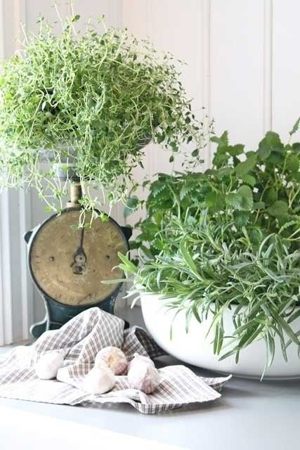 25 Best Ideas About Indoor Plant Stands On Pinterest