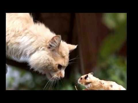 Alaruine see what's new today ?: Top 1000+ ideas about Cute Funny Best Animals 2017...