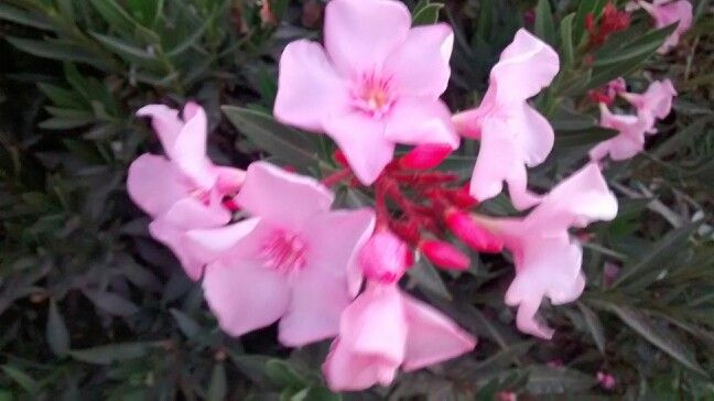 Bellesas de flores