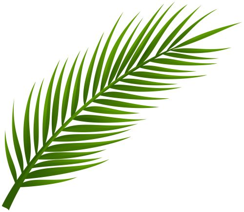 Palm Tree Leaf PNG Clip Art