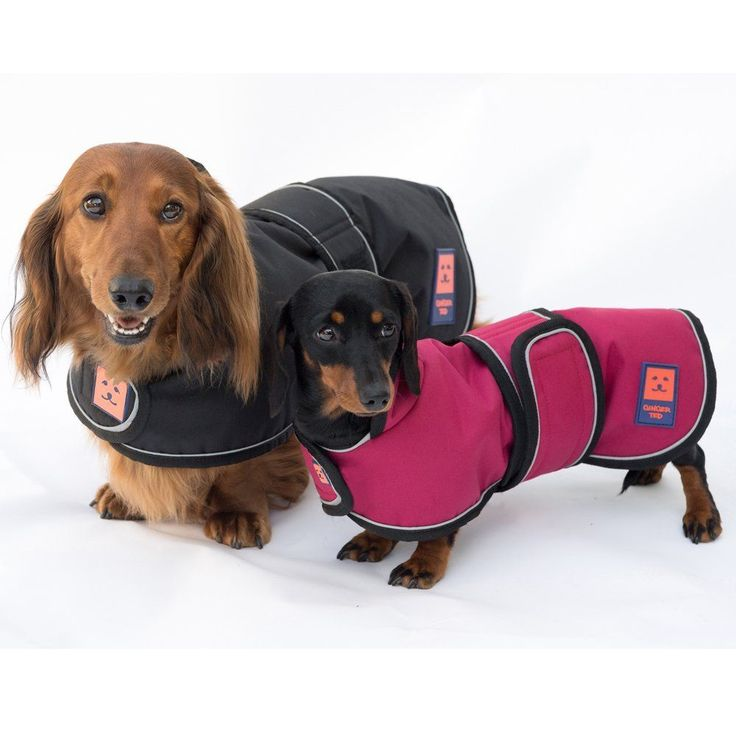 Dachshund Winter coat - Dachshund clothes that actually fit! | dachshund-central