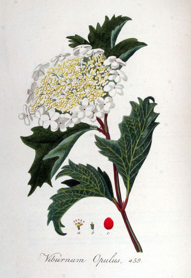 best heidehoekje images on pinterest dream garden gardens and