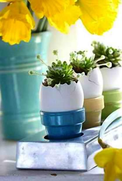 32 best eggshell garden images on pinterest spaces beautiful diy eggshell zen garden perfect for fathers day negle Choice Image