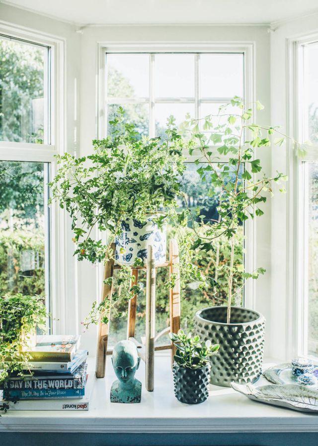 sumptuous design ideas green house plant identification. Kv llssol in i vardagsrummet 446 best n d o r g a e  images on Pinterest Container
