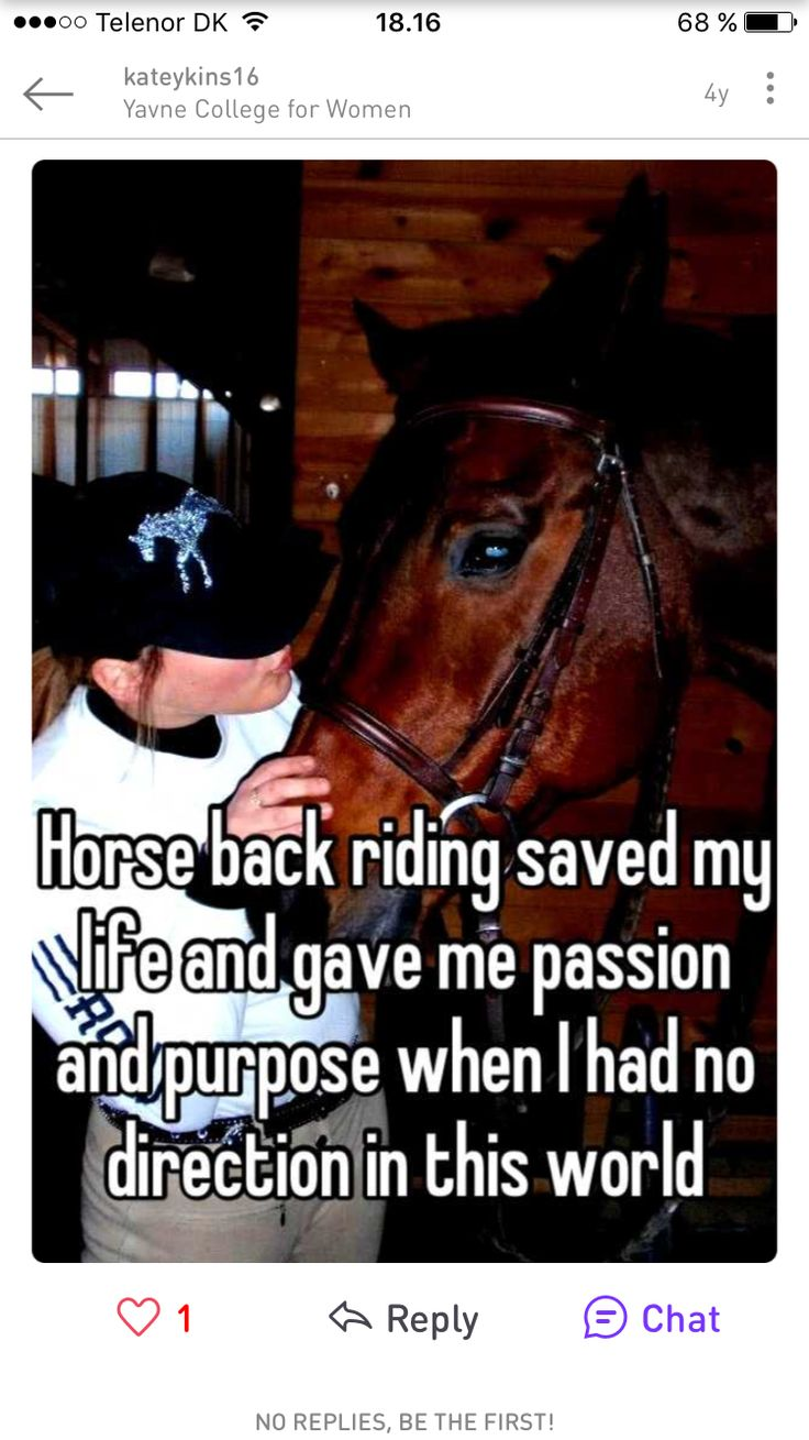 1180 best equestrian images on pinterest | horses, equestrian