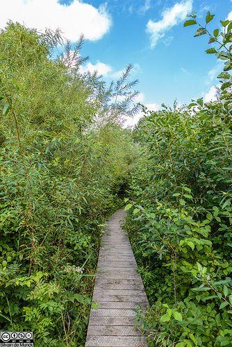 Natuurtuin, Westerpark Zoetermeer, The Netherlands, by Silvain de Munck.