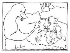 Coloring Book Page Duck Pond