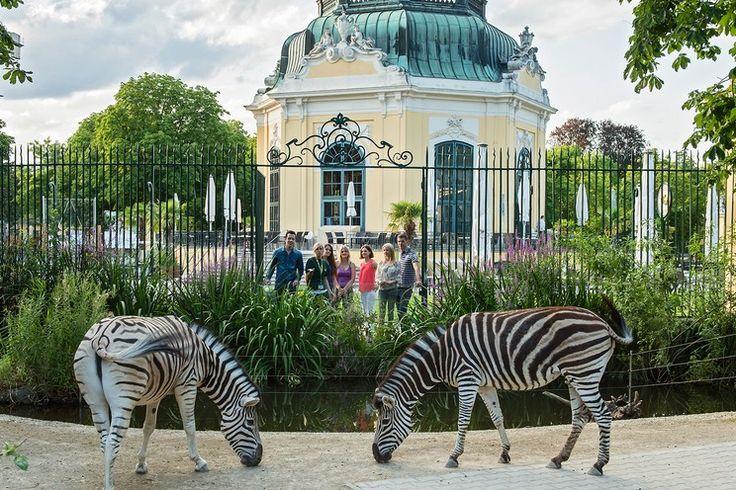 Tiergarten Schönbrunn, Zoo in Vienna #vienna #austria