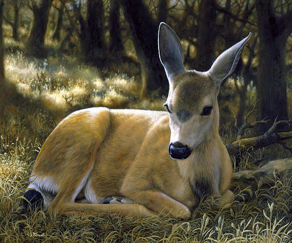 316 Best Images About Art Wildlife Deer On Pinterest