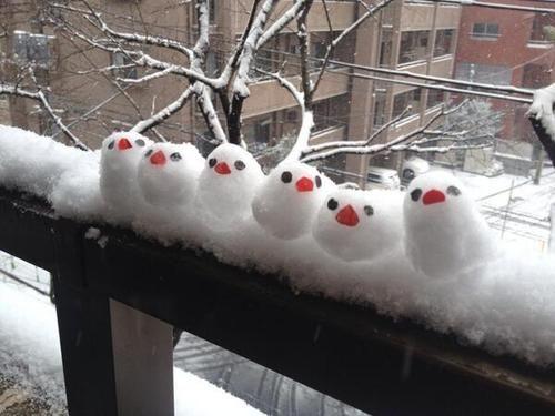 雪の日にやってくるという文鳥