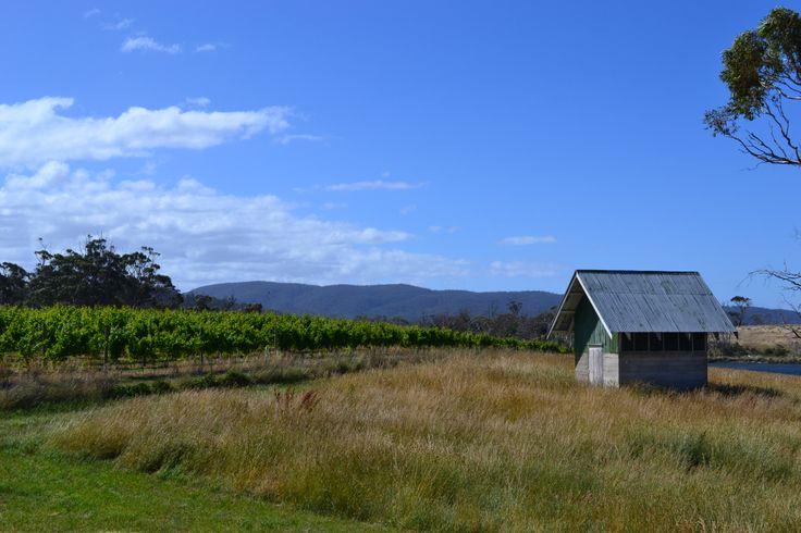 Our vineyard on the east coast of #Tasmania