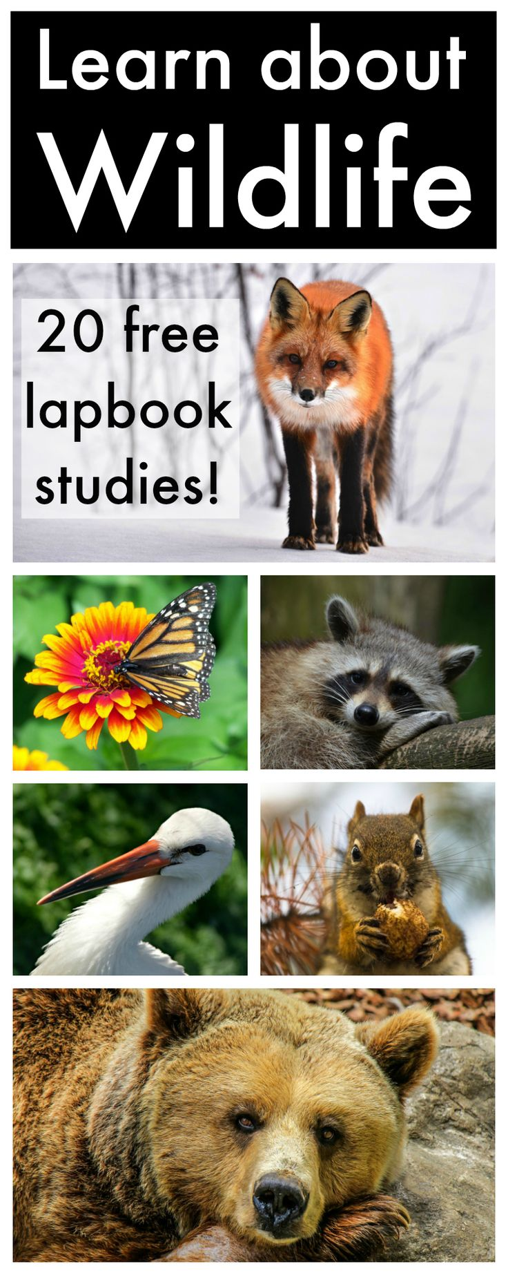 Learn about wildlife with these 20 free lapbook studies! A great break from your regular science curriculum.