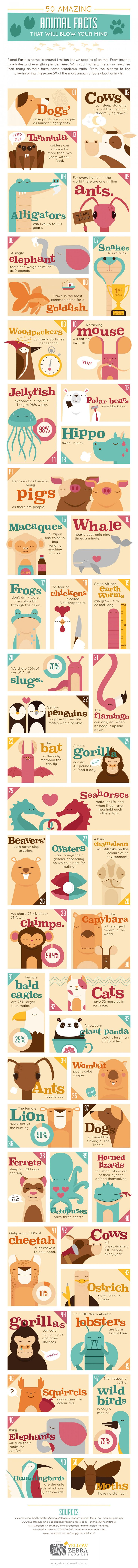 50 Interesting Animal Facts Infographic. Topic: pet, dog, cat