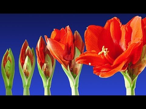 Stunning Blooming Flowers & Relax Music - 2 Hours Timelapse - Color Therapy - Sleep Music - HD 1080P - YouTube