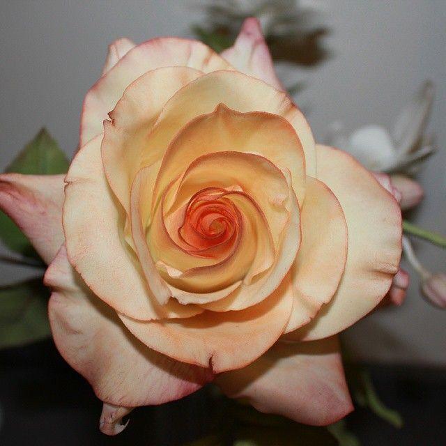 Gumpaste rose, gumpaste flower, şeker çiçekler, fondant, şeker hamuru, kekperest, cake topper, handmade, sugar figurine