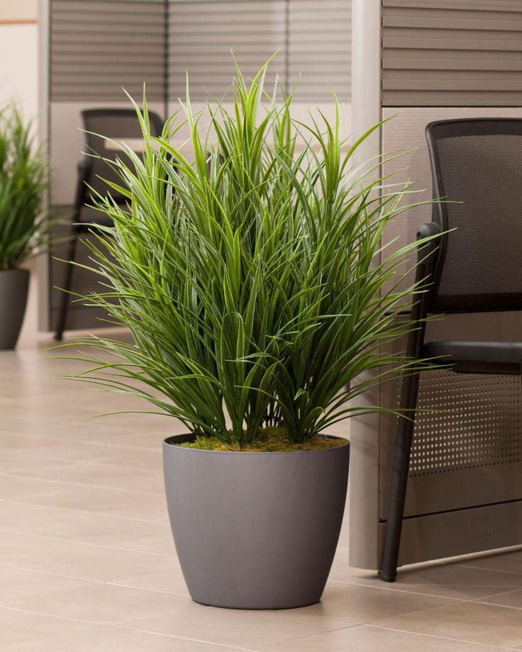 565 best images about home decor on pinterest - Tall office plants ...