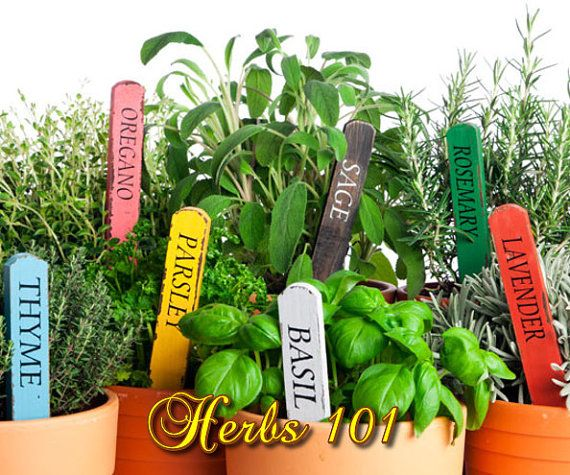 The 25 best cooking with herbs and spices pdf ideas on pinterest herbs 101 learn how to plant grow cook with naturalherbs pdf ebook fandeluxe Ebook collections