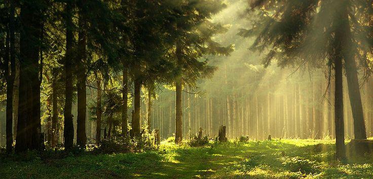 Wandern Thüringer Wald - am Rennsteig - Berghotel Oberhof ...