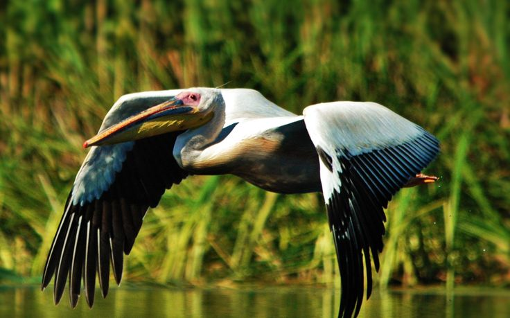 http://www.touringromania.com/tours/long-tours/supreme-adventure-danube-delta-private-tour-6-days.html