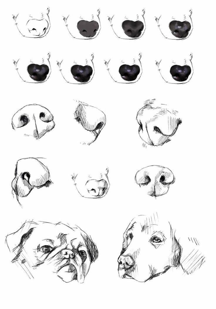 dog's nose reference tutorial by ryky