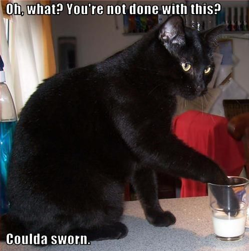 How fitting...I walked into my cat doing this to my iced tea tonight.