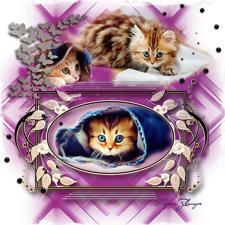 http://animabelle.free.fr/turoriels_traductions/Karin/Cats/Cats.htm