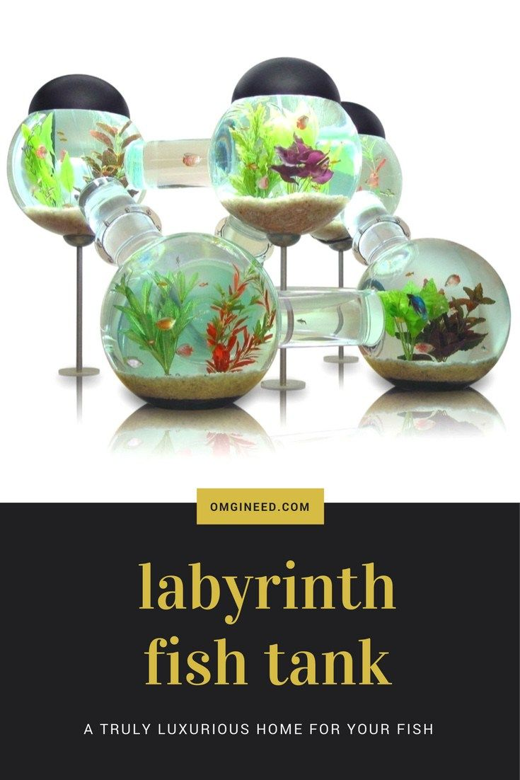 Best 20 unique fish tanks ideas on pinterest fish tanks for Labyrinth fish tank