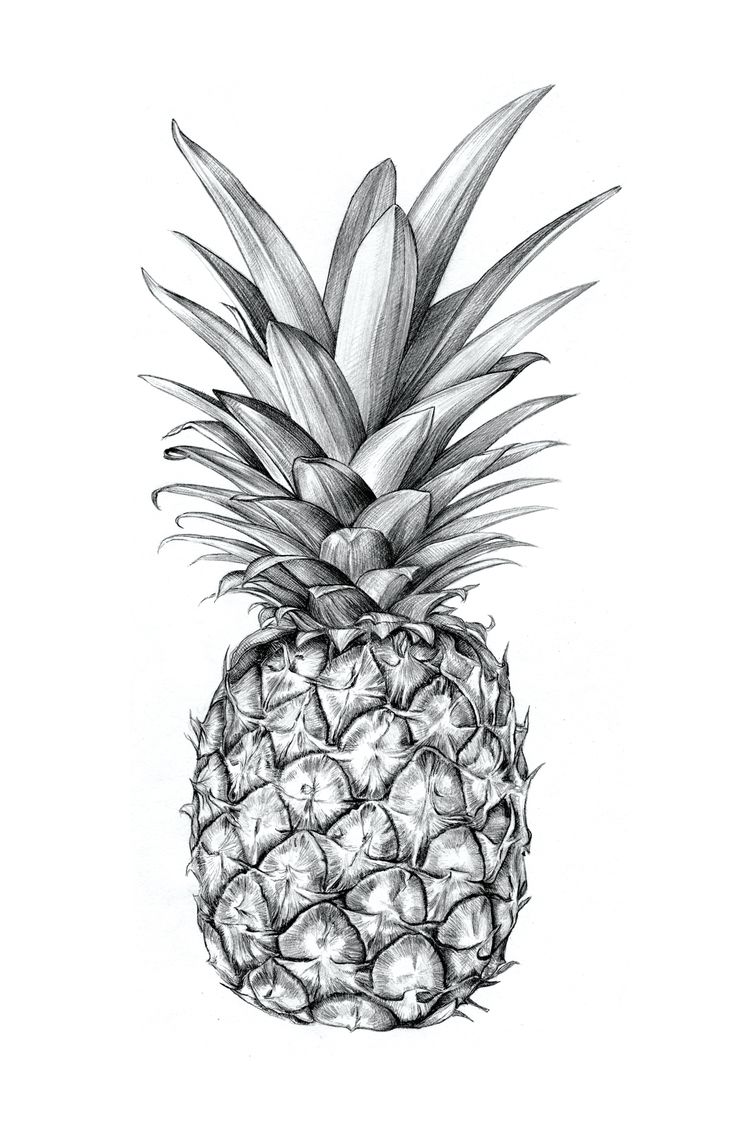 Sibling u0026 Co. Illustrated pineapple. http://society6.com/siblingandco : u251c ILLUSTRATION ...