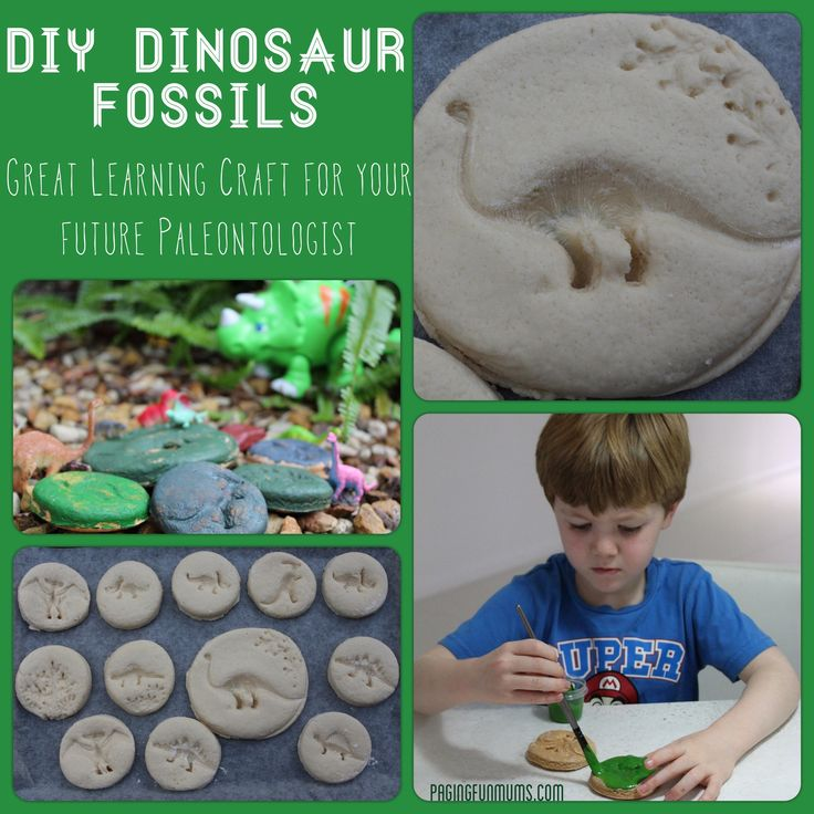 DIY Dinosaur Fossils!  ** Salt Dough: 4 cups flour 1 cup salt 2 cups water Mix ingredients.  Knead dough.  Roll and cut into circles using cookie cutter or bottom of cup.  Use small dinosaurs to make imprint.  Bake at 180 degrees for 1 hour.  Paint if desired.