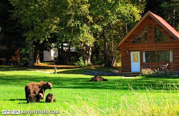 Grizzly bear and wildlife viewing safari from a lodge in Tweedsmuir Provincial Park, BC