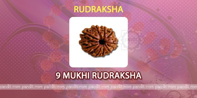 9 mukhi Rudraksh by Astrologer Rahul Kaushal -------------------------------------------------------  It has 9 lines on it and has all the 9 powers of nine Godesses and provides all religious powers to one who wears it. It has blessings from 9 holy places names as Pashupatinaath, Kedarnaath, Somnaath, Muktinaath, Badrinaath, Viswanaath, Jagannaath, Paarasnaath, and Vaidnaath. http://www.pandit.com/9-mukhi-rudraksh/