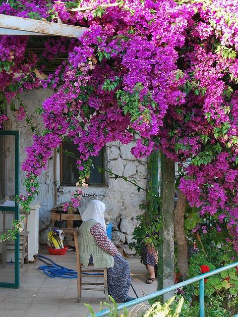 Purple in Üçağiz by Alessandra Kocman, via Flickr ~ Antalya, Turkey