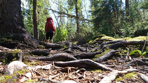 How to hike Nut Point Trail in Lac La Ronge Provincial Park