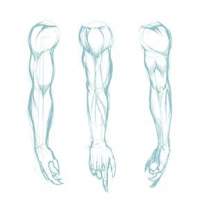 Google Image Result for http://www.dragoart.com/tuts/pics/13/11554/94677/how-to-draw-muscles-step-3.jpg