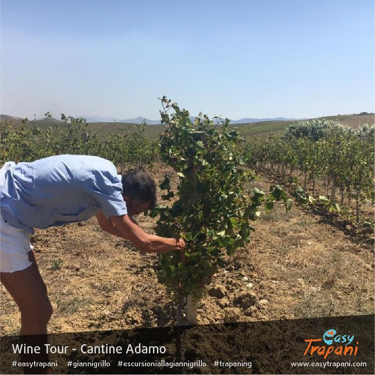 Find out more about the Wine Tour: http://www.easytrapani.com/escursione-winetour.php?id=61 Contact us for booking or for any other customized tour we can exclusively arrange for you easytrapani@easytrapani.com (+39) 3246085443  #giannigrillo #easytrapani #escursioniallagiannigrillo #trapaning #instalike #instagood #bestoftheday #photooftheday #holidayseason #photographyeveryday #instatravelling #igersitalia #communityfirst #instatravel #travel #mytravelgram #instapassport #trapani #winetour…