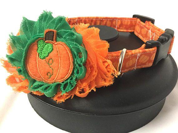 Dog collar pumpkin dog collar orange dog collar flower dog