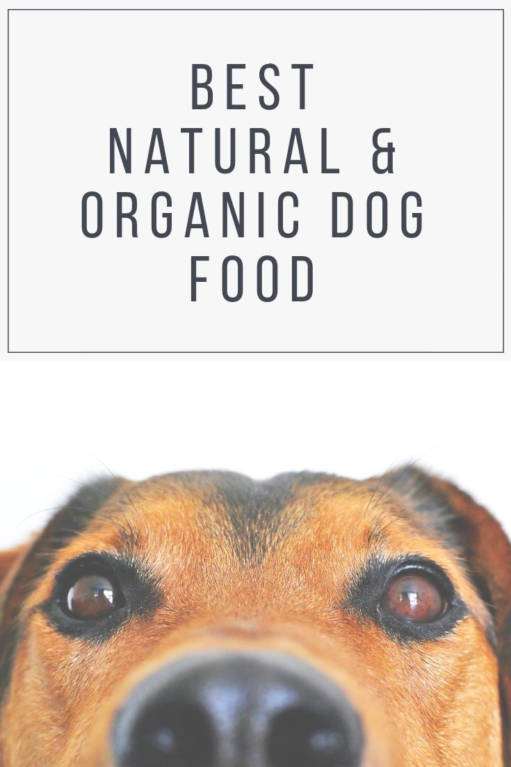 Reviews Of The Best Natural And Organic Dog Food Available In The