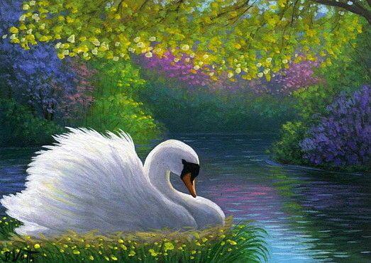 P Swan Ltd Swan bird spring lake ...