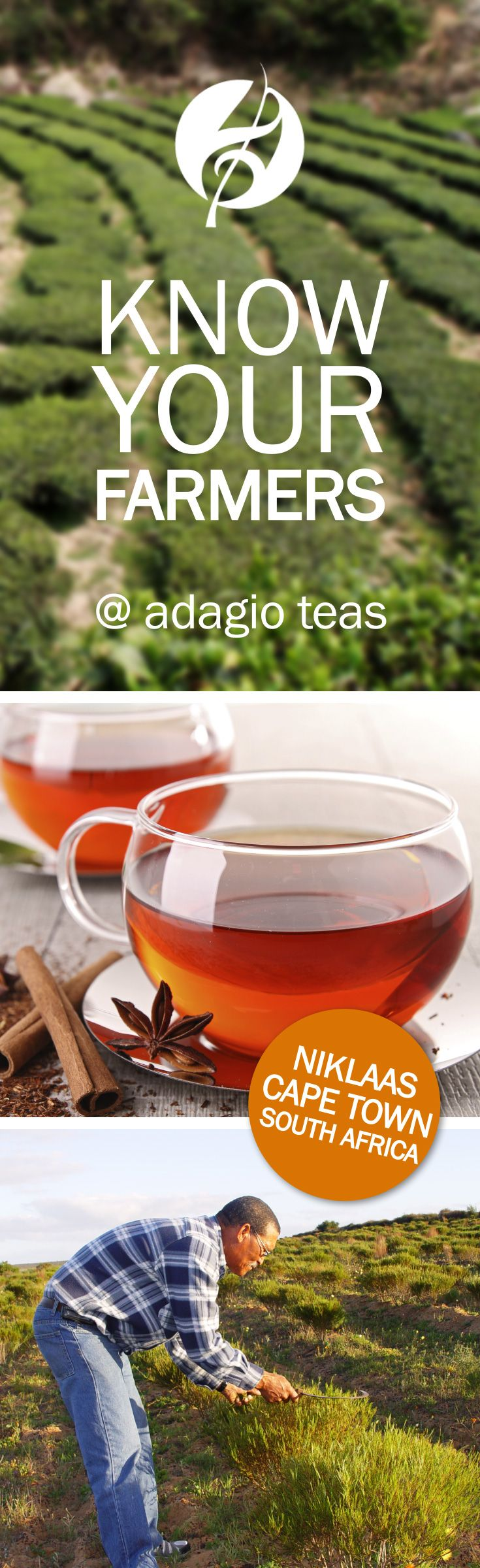 Chinese herbs tea stress anxiety - Rooibos Made From The South African Redbush Tree Makes For A Healthful Herbal Tisane