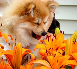 Top 4 Allergies In Dogs: Treatments & Symptoms