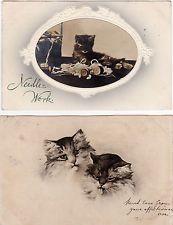 2 x AK KATZE 1905 kleine Katze bei der Nadelarbeit und 2 Perserkatzen   ( 43610