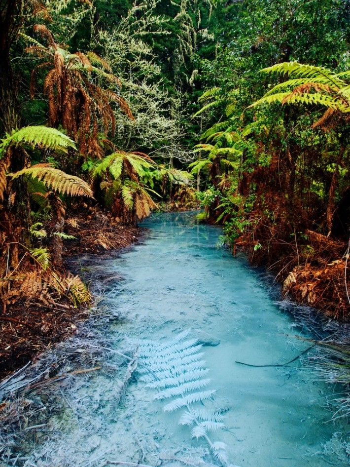 Clear thermal stream in Whakarewarewa Redwoods Forest, Rotorua / New Zealand. 3 Months from now I will be here :))