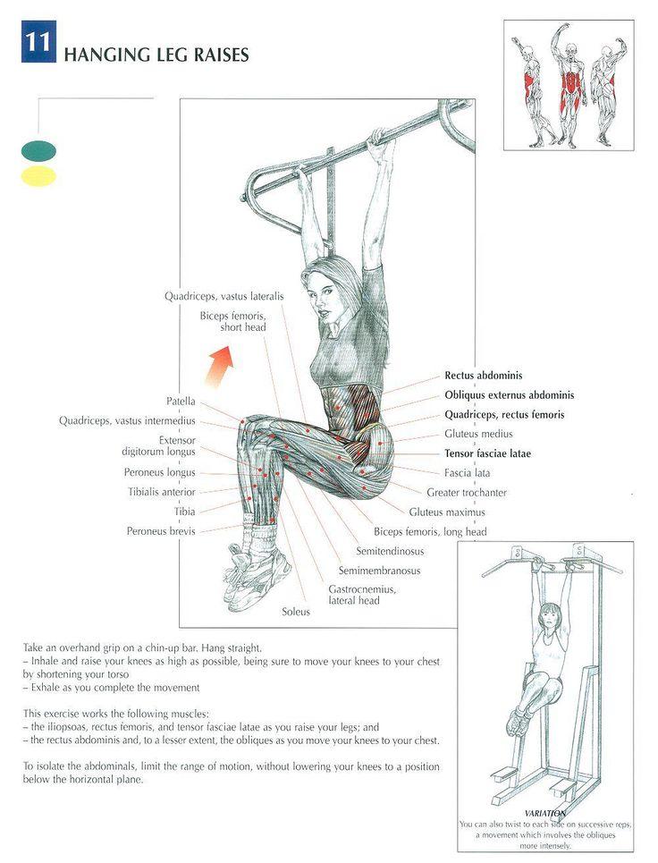 Muscles Toning | Rectus abdominis; Obliquus externus abdominis; Quadriceps: retus femoris ~ Hanging Leg Raises