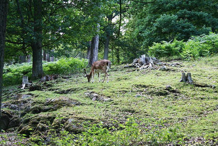 Jönköpings stadspark – utflyktsmålet för hela familjen