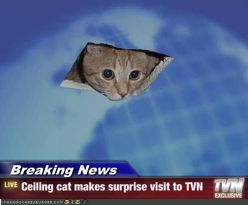 ceilings  news and cats on pinterest