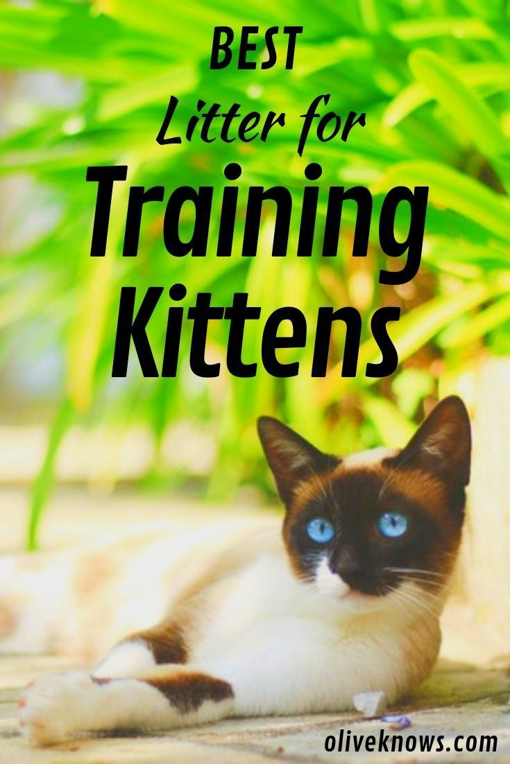 Best Litter For Training Kittens You Ll Be Happy Too With Images Best Litter For Kittens Litter Box Training Kittens Litter Training