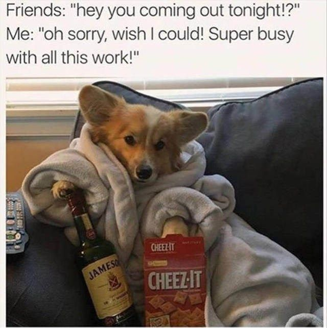 These Animals Have Some Great Plans For The Weekend Memes